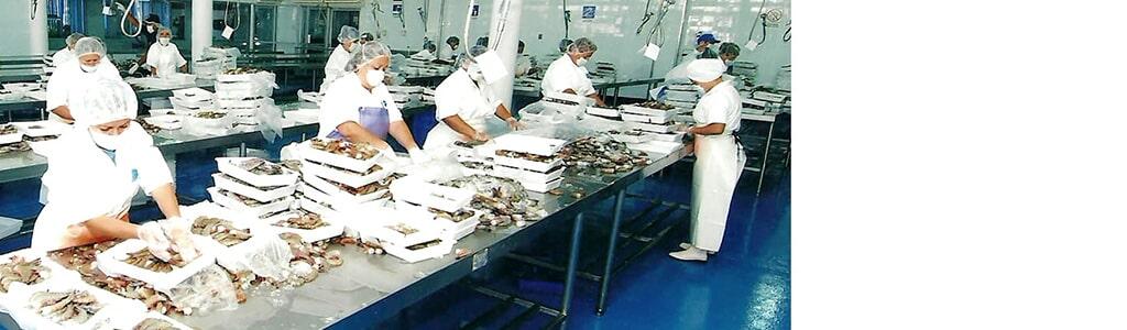 PESCA INDUSTRIAL MAROS SA DE CV - Venta de tiburon