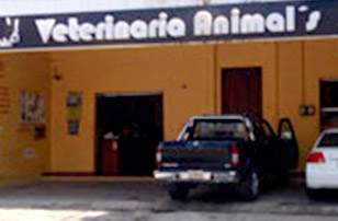 VETERINARIA ANIMALS-vacunas