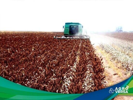AGROVERSA-Agroquímicos