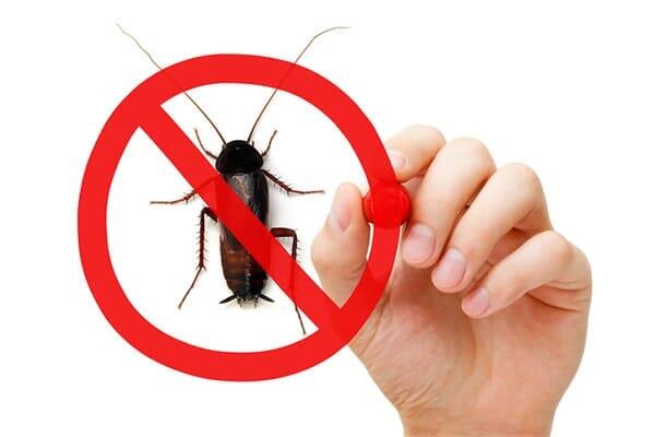 FUMIGACIONES ESTRATEGICAS AHR - Control de plagas