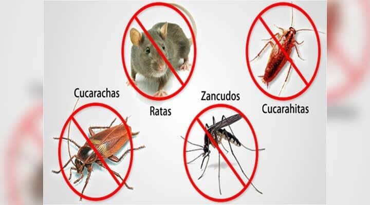 ROCAMALU CONTROL DE PLAGAS - Animales de cama