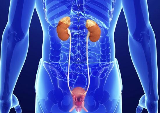 DR. OSCAR MANUEL SAUCEDO LUQUE - Cáncer de próstata, riñón, vejiga, pene