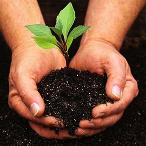 AGROS DE CAJEME SA DE CV - venta de semillas