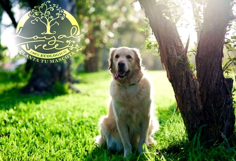 LOYAL TREE - CONSULTAS VETERINARIAS