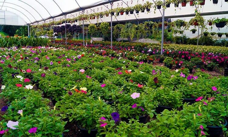 VIVEROS MADRIGAL - Plantas y flores