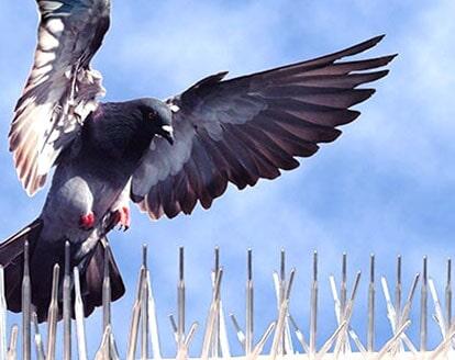 FUMIGACIONES STOP SC - control de palomas