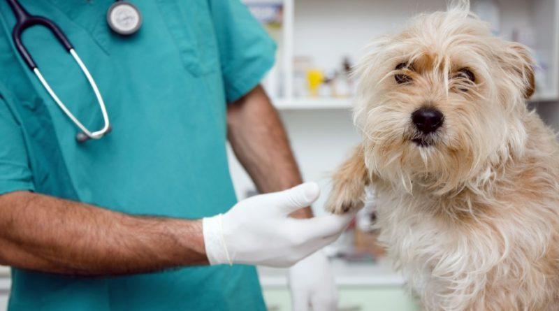 FRAL HOSPITAL Y CLÍNICA VETERINARIA- Tratamientos para animales
