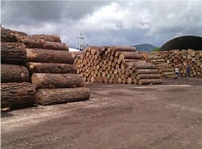 EL MADERAL DE SAN LUIS - venta de madera para construcción y embalaje